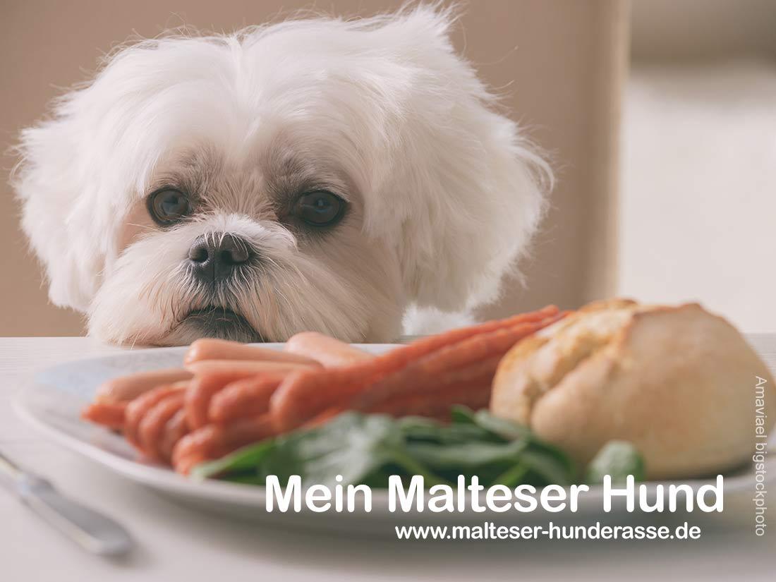 Malteser Ernährung