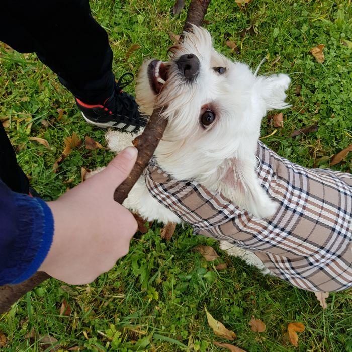 malteser-hund-fotos (10)