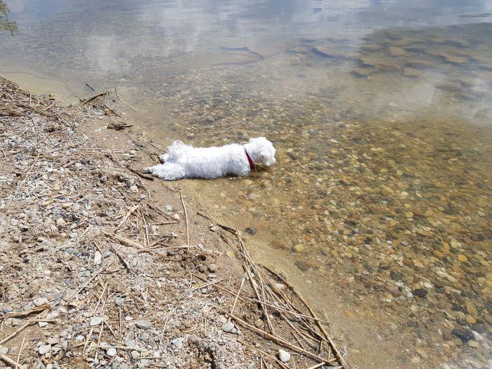 malteser-hund-fotos (23)