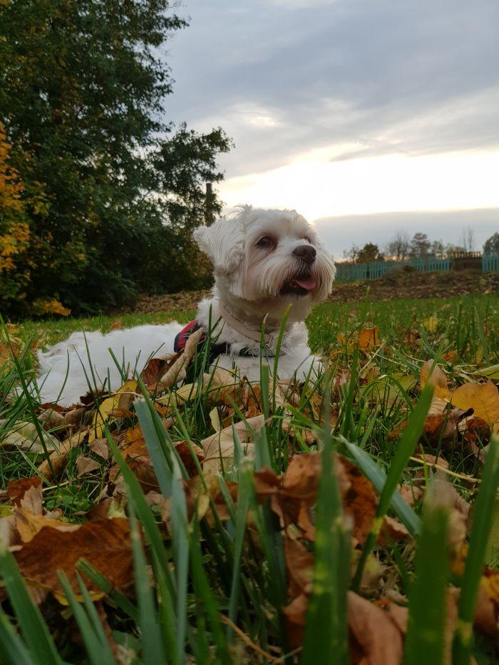 malteser-hund-fotos (3)