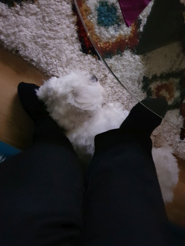 malteser-hund-fotos (5)