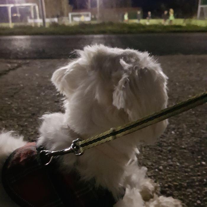 malteser-hund-fotos (7)