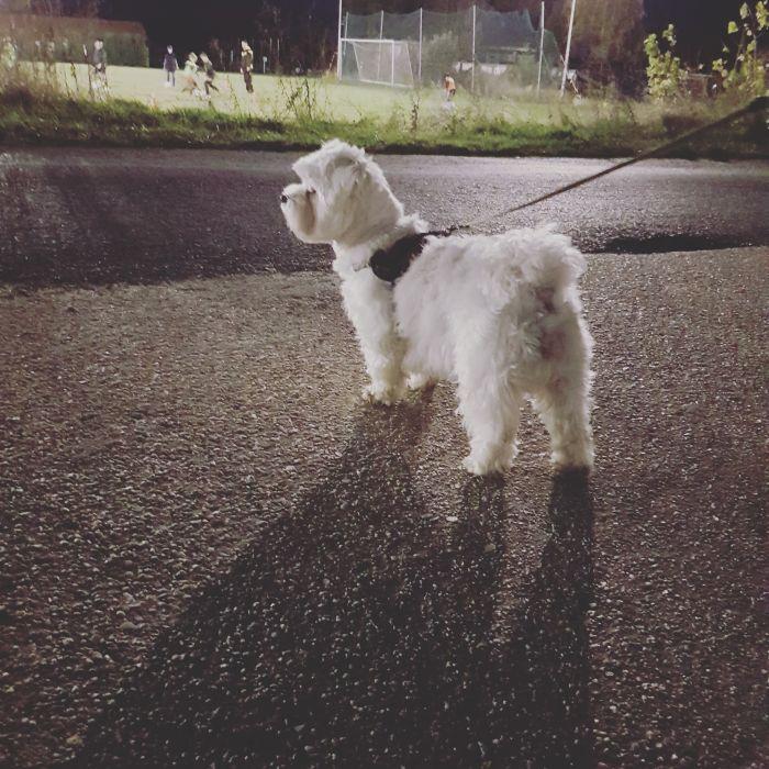 malteser-hund-fotos (9)