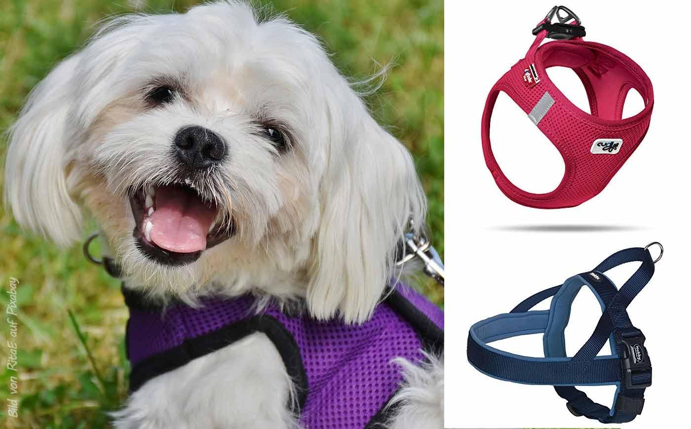 Hundegeschirre für Malteser Hunde